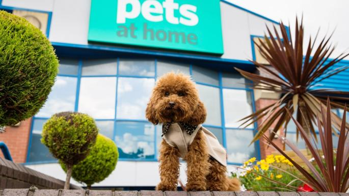 Pets at Home announce a maintained interim dividend of 2.5p per share